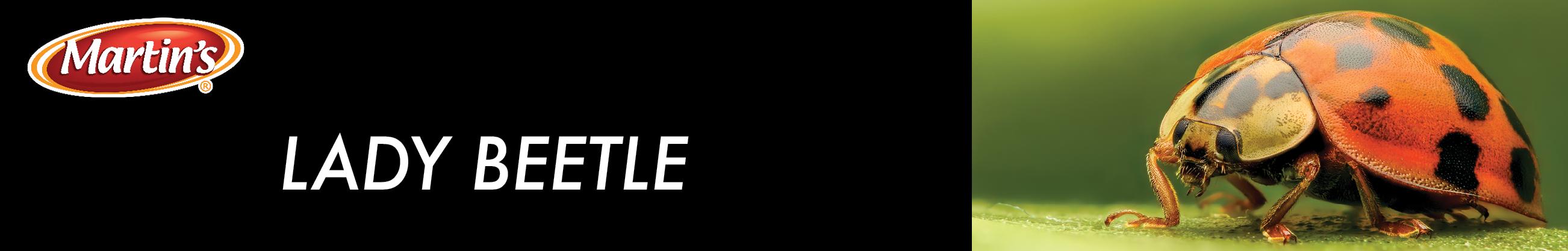 BLOGimage.ladybeetle-1