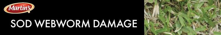 damage sod webworm-1