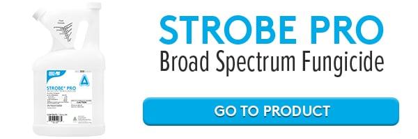 strobe-pro-online-2