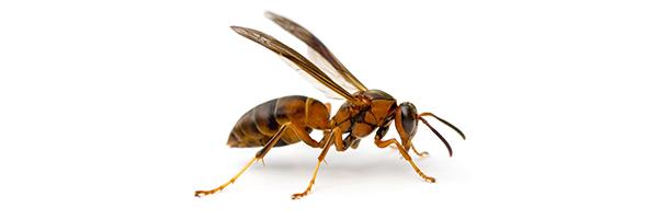 wasp-example