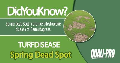 Spring Dead Spot Identification